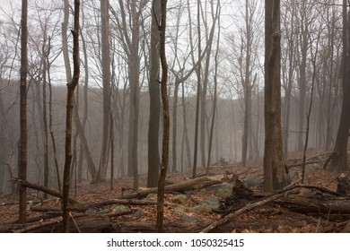 Bare trees in the fog. Cold and empty forest in the early morning. Spooky remote location. 👻