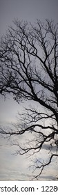Bare trees looking a little eerie along the way.