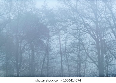 Bare trees on misty morning.