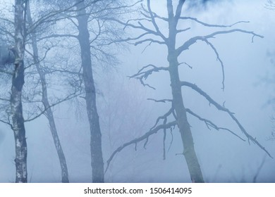 Bare trees on misty morning in winter.