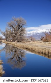 bare trees reflected in an irrigation canal in Bishop California with blue sky and White Mountains