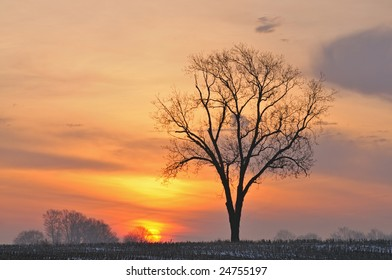 Bare trees in a rural landscape silhouetted against a colorful dawn sky with sun disc, Michigan, USA