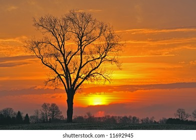 Bare trees in a rural landscape at sunrise, Michigan, USA