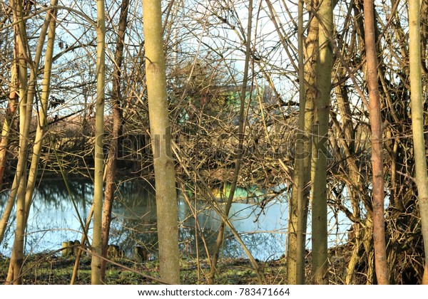 Bare trees with water behind with winter sun