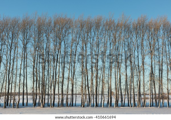 bare trees in winter space