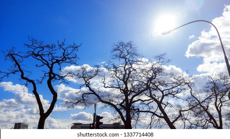 Bare treetops by bright blue sky. Winter landscape with naked dry trees black silhouettes
