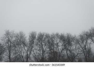 Bare treetops on winter afternoon, monochromatic image