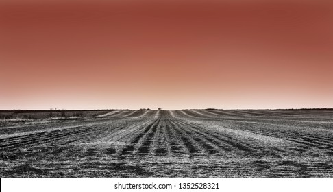 Bare Winter Crop Rows at Sunset Black and White