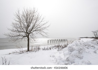 Bare winter tree in a snow covered park on the shores of Staten Island New York.