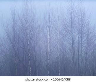 Bare winter trees in mist.