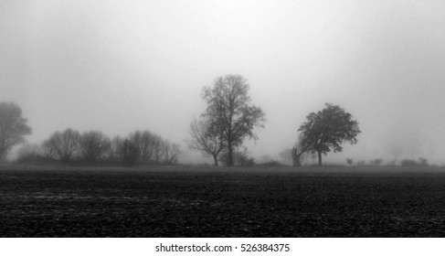 bare-branched silhouettes of lined-up trees fading into the fog, black and white, mystic mood