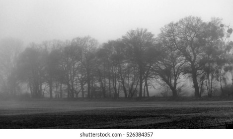 bare-branched silhouettes of tree-alley fading into the fog, black and white, mystic mood