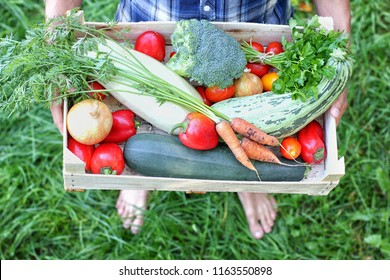 Barefoot farmer keeps a box of vegetables. Autumn harvesting concept. Top view.