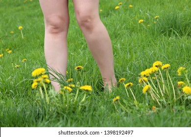 Barefoot girl walking on green grass with blooming dandelions, naked female legs on a summer meadow. Harmony with nature, nudist woman, concept of vacation, relaxation, ecology, healthy lifestyle