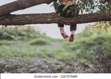 barefoot on a tree