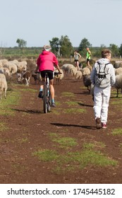 Bargerveen, Netherlands- May 31, 2020: Hiker, cyclist and heather sheep in the Bargerveen, Netherlands