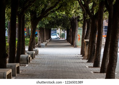 Bari, Italy - 04 25 2018: Tree-lined avenue in the city center square.