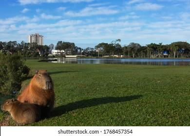 Barigui Park in Curitiba Parana Brazil.