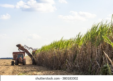 Bariri, Sao Paulo, Brazil, October 10, 2008. Sugar cane harvesting in Brazil