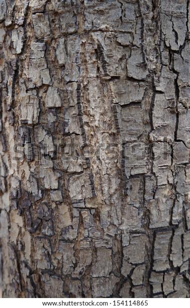 Bark of acacia tree texture