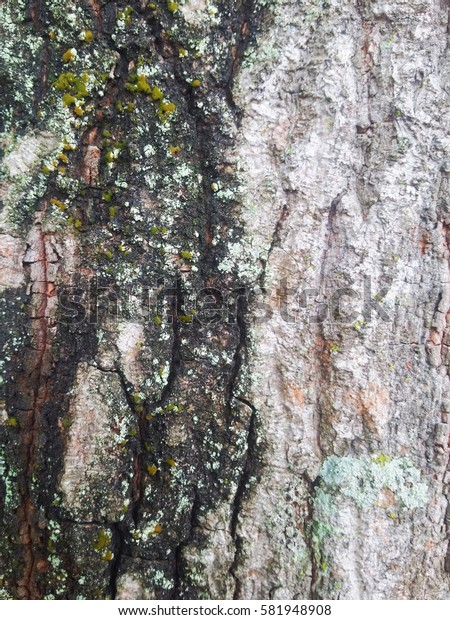 Bark for background and texture