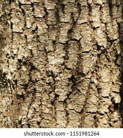 Bark in close-up. Texture