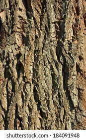 Bark detail of old tree in the sunlight