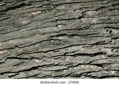 bark ecorce husk texture theme tree wood