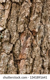 Bark of a felled tree