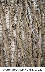Bark of an old gnarled tree.
