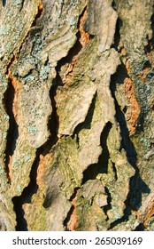 Bark of a old tree with moss under sunlight