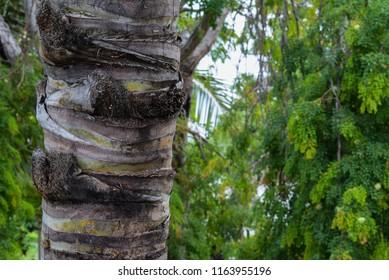 Bark on Palm Tree