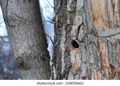 Bark on tree trunk in winter