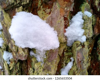 Bark on the trunk of a pine.