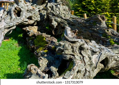 Bark is the outermost layers of stems and roots of woody plants. Plants with bark include trees, woody vines, and shrubs.
