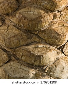 The bark of palm near the Red Sea in Egypt