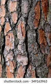 The bark of the pine tree photographed close up