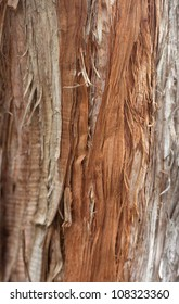 the bark of pine trees as the background