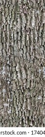 Bark texture with moss vertical orientation. Seamless pattern background for wood material and 3d modeling of tree.