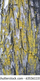 Bark of tree.