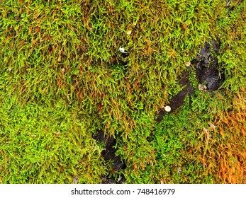 Bark of a tree with bright green moss.
