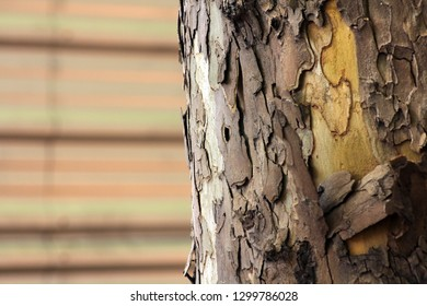 Bark of tree, close up detail with unfocused background