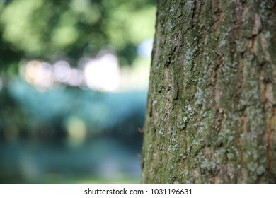 Bark of tree. Close up trunk of tree background.