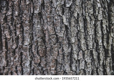 Bark of tree in forest.  Closeup of the bark of an old tree in mountain.