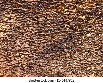 Bark of the tree from inner side with holes made by woodworms