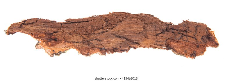 Bark tree isolated on white background