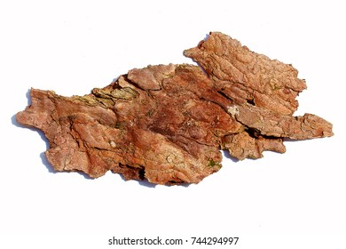 bark of tree on white background. detailed structural pattern.
