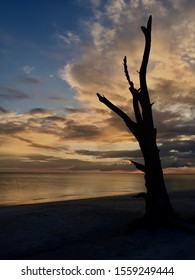 Bark tree stands alone on a beach amongst a gorgeous sunset.