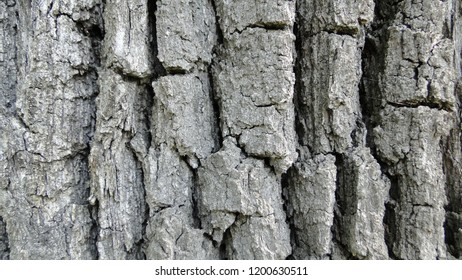 Bark tree texture and background