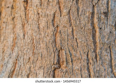 Bark Tree Texture background or wallpaper